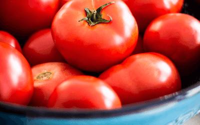 The Gazpacho's Recipe