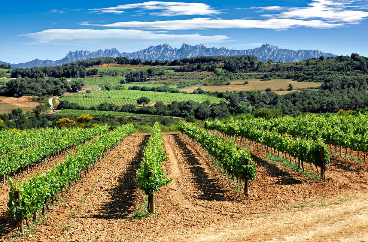 The Penedes and the Cava