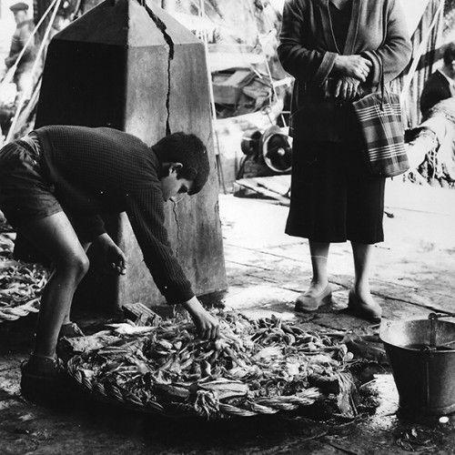 Vente du poisson