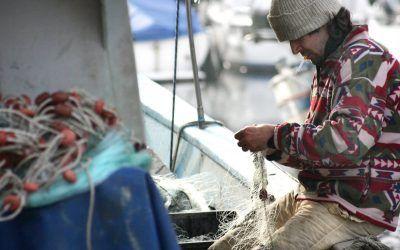 Subhastes de peix i altres curiositats mediterrànies