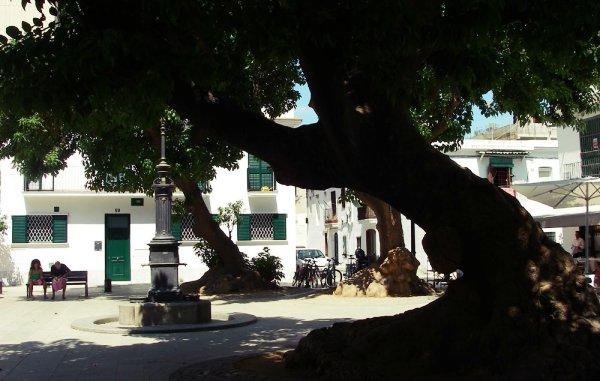 Plaza Prim en Poblenou